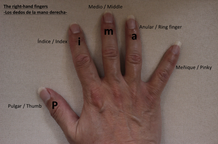 right hand labeled in English and Spanish